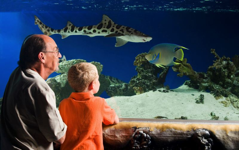 by: SUBMITTED PHOTO - The Portland Aquarium in Oak Grove brings new life to McLoughlin Boulevard and a former Black Angus building.