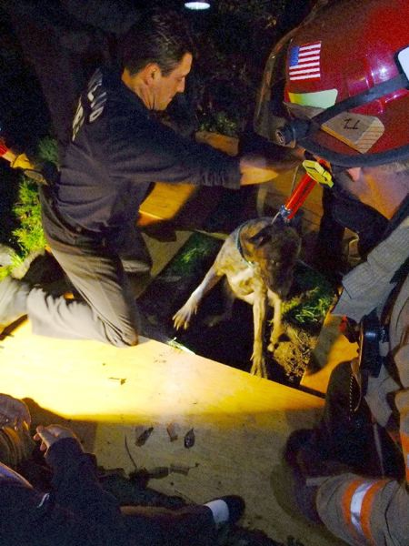 by: COURTESY OF PORTLAND FIRE & RESCUE - Portland Fire & Rescue trench rescue team pulled Frito the dog from a 15-foot-deep sinkhole in the backyard of a Southeast Portland home. The dog was unharmed.