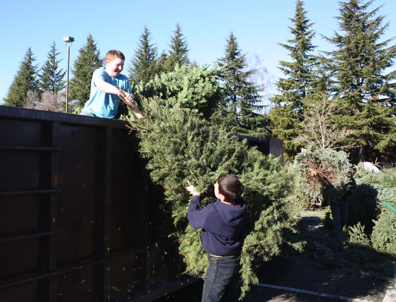 by: HILLSBORO TRIBUNE PHOTO: DOUG BURKHARDT - Troop 225 Boy Scout Noah Ford, who lives in Aloha, takes trees from fellow scout Peter Fillo of Hillsboro and hauls them up into a container. The pair were among more than two dozen Troop 225 scouts and volunteers working over the weekend to collect and recycle Christmas trees, an annual Boy Scouts fundraiser.