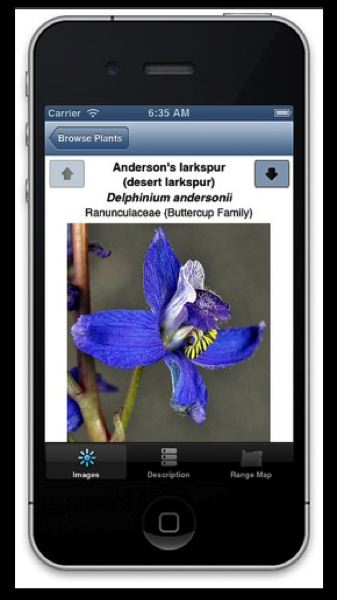 by: PHOTO: TANYA HARDY - A screenshot of the app identifying a desert larkspur.