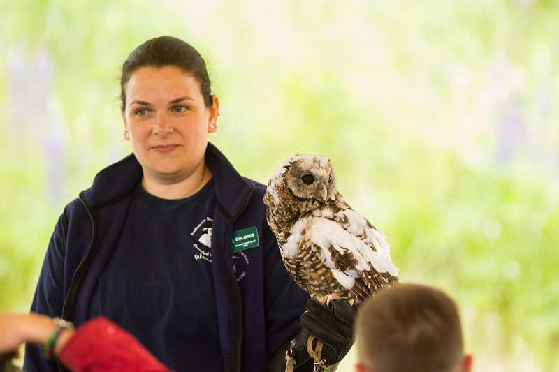 by: TIMES PHOTO: DAVID BLAIR - Dolores Weisbaum, an Audubon Society of Portland volunteer, displays a spotted owl during the Tualatin River Bird Festival at the Tualatin River National Wildlife Refuge.