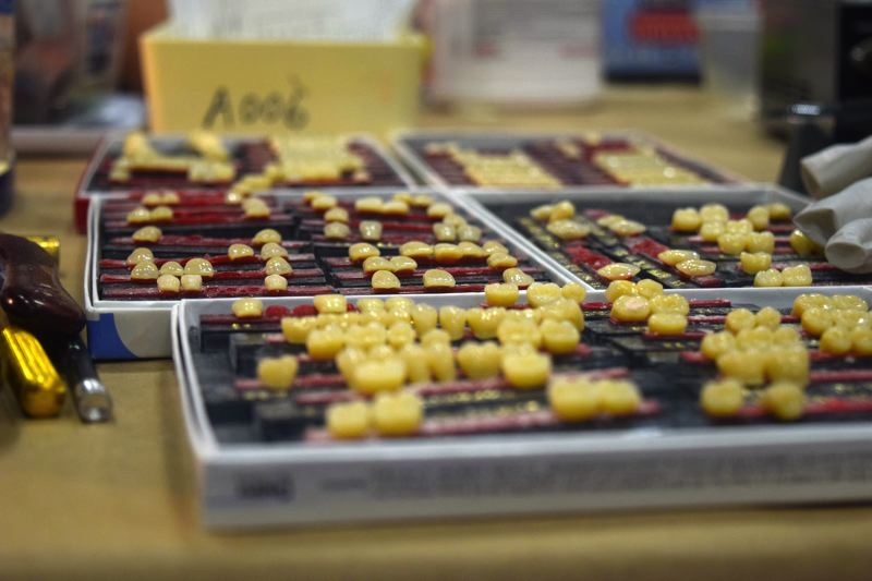 by: CONNECTION PHOTO: DREW DAKESSIAN - A tray of artificial teeth at Compassion Southwest Portland.