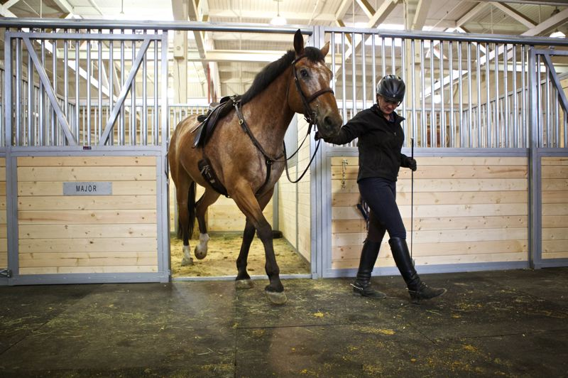 by: TRIBUNE PHOTO JAIME VALDEZ - Rob Bender who is an officer with the Portland Police Bureaus Mounted Patrol Unit, places a bridle on Olin before heading out to the outdoor arena at Centennial Mills. The horses are back at the former flour mill after eight new pre-made stalls were installed in a safe area of the building.
