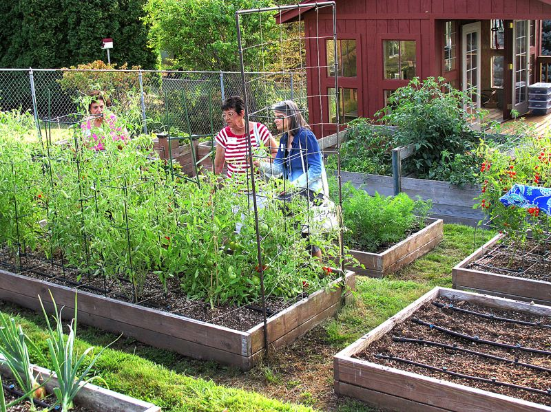 Photo Credit: OUTLOOK PHOTO: BEVERLY CORBELL - Visitors tour the community garden at the Sunderland home in Gresham where people can grow their own food.
