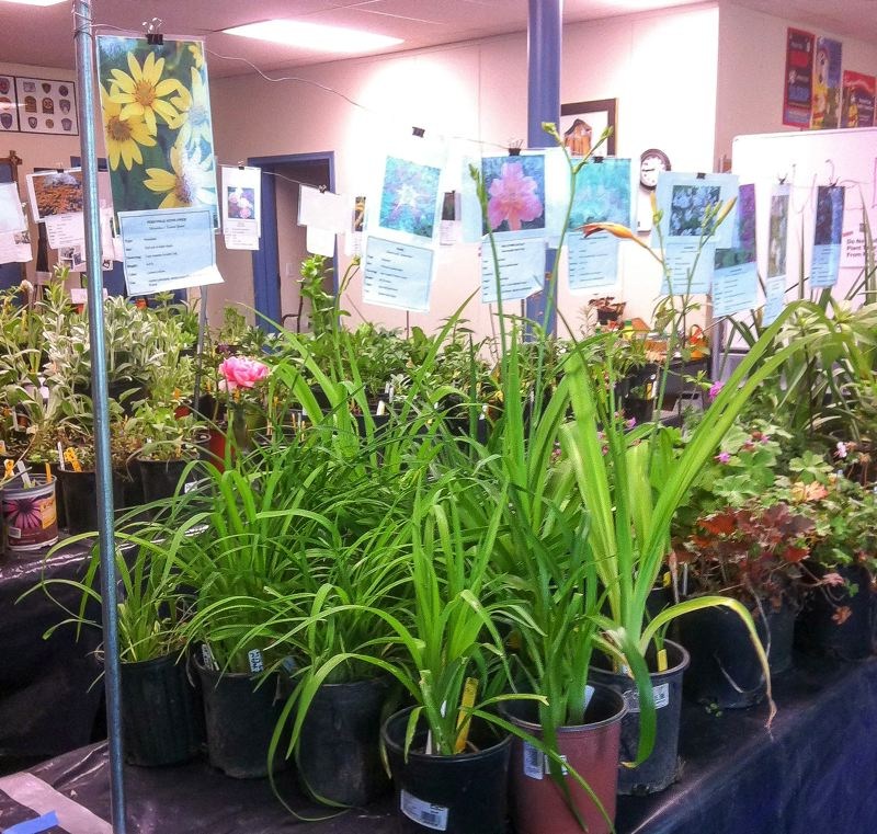 Plant sales sprout from local groups