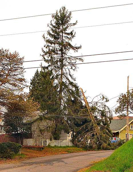 Wild spring windstorm downs trees, blacks out neighborhoods