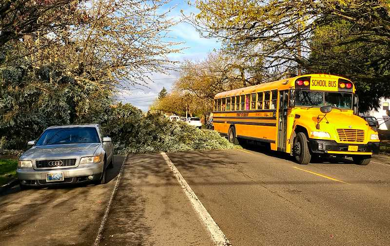 BECKY LUENING - A school bus maneuvers around a tree felled by high winds, blocking the eastbound lane of S.E. Woodstock Boulevard near 60th Avenue.