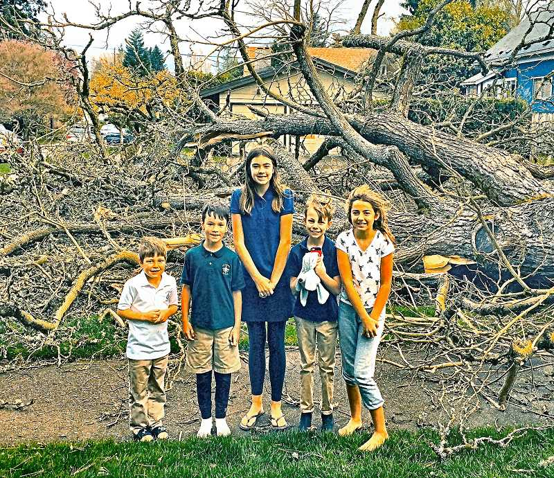 COURTESY OF NICOLE HUETHER - When a huge Catalpa tree at S.E. 37th and Steele fell in the April windstorm, it spanned Steele Street and the sidewalk. Neighborhood children, as you see, thought it was quite an event! Thankfully, no one was hurt.