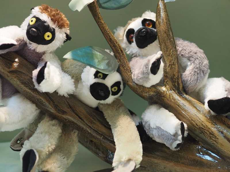 Lemurs rule the roost at Brookwood Library