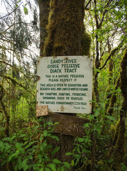 PAMPLIN MEDIA GROUP: JOSH KULLA - The Sandy River Gorge Preserve is a 156-acre parcel of land on the banks of the Sandy River.