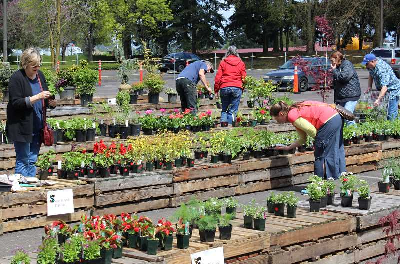 SPOKESMAN PHOTO: CLAIRE GREEN - Shoppers from Wilsonville and neighboring communities flocked to the Rite Aid annual plant sale and fundraiser April 28-29.