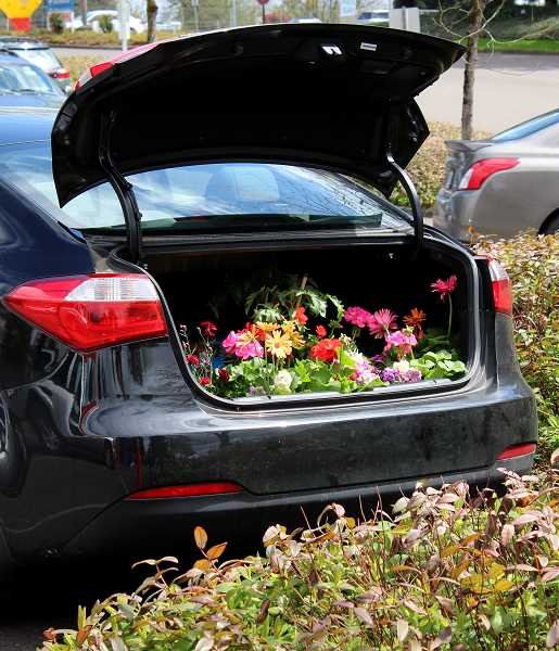 SPOKESMAN PHOTO: CLAIRE GREEN - Most shoppers packed their trunks and passenger seats to fit all of plants they bought from the sale.