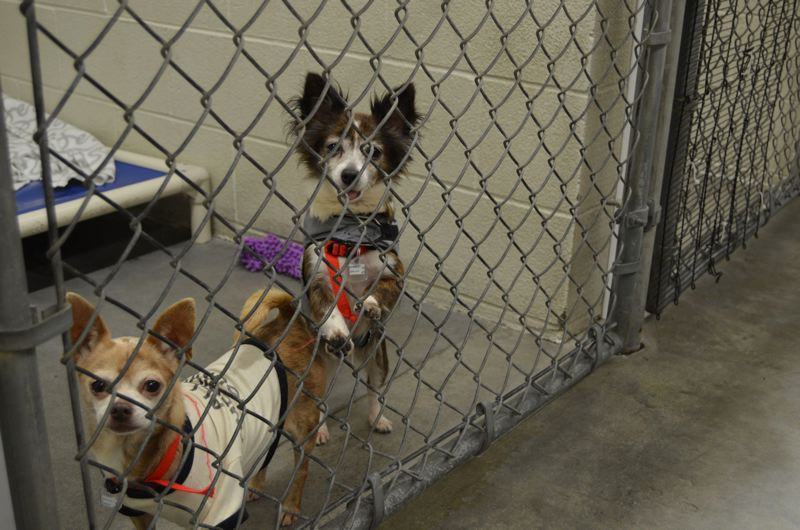 FILE - Fido's will connect shelter dogs with lovers of beer and wine. The Tigard business plans to open this summer.
