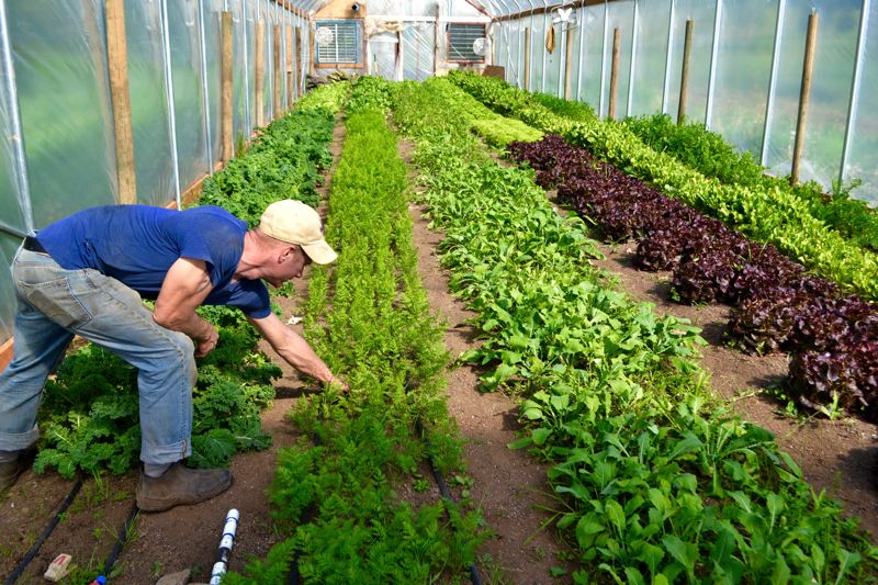 POST PHOTO: BRITTANY ALLEN - Slice of Heaven Farms includes two greenhouses, where the family grows a multitude of salad greens and other vegetables.