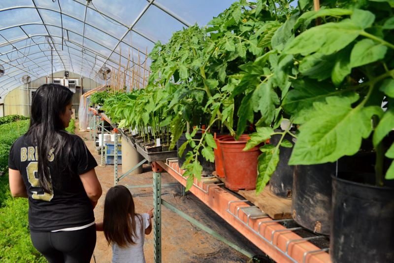 POST PHOTO: BRITTANY ALLEN - Marieta and Brandon Easley grow produce to support their family and a healthy community.