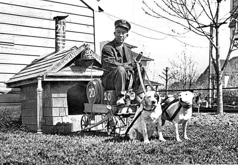 COURTESY OF THE HISTORIC BELMONT FIREHOUSE - A fire horses best friend was the fire station dog, who directed the horses during fire calls, guarded them at the scene of an emergency, and at times ran ahead of the team to clear their path of pedestrians. While Dalmatians were the preferred breed at most fire stations, these two dogs of uncertain breed were trained and bred for their firehouse tasks in Sellwood.