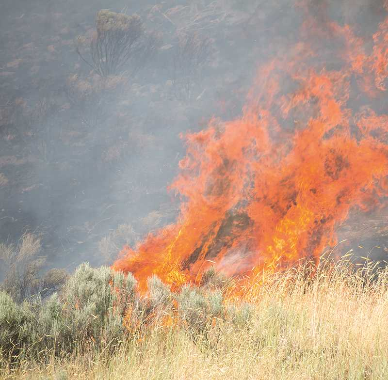 LON AUSTIN - A brush fire near Willowdale Road consumed 7 acres on Wednesday evening.