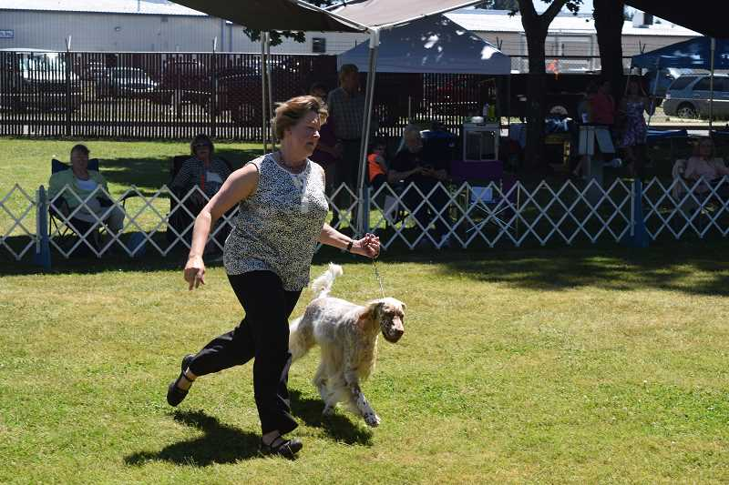 JOHN BAKER - Despite the heat over the weekend, the Clackamas Kennel Club's annual all-breed dog show went on nicely.