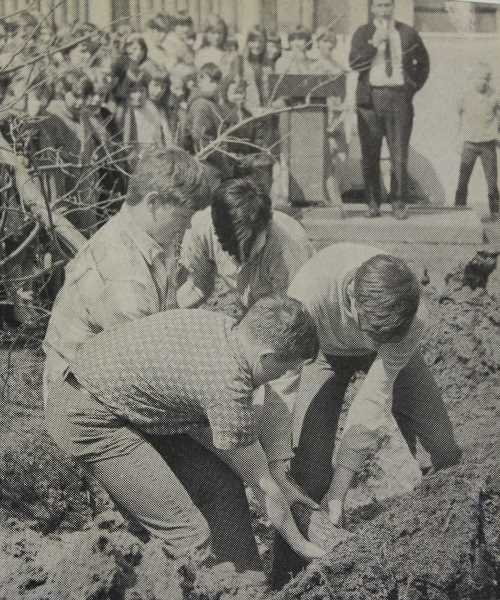 SUBMITTED PHOTO - Students plant a tree outside Sunset in the 1960s.