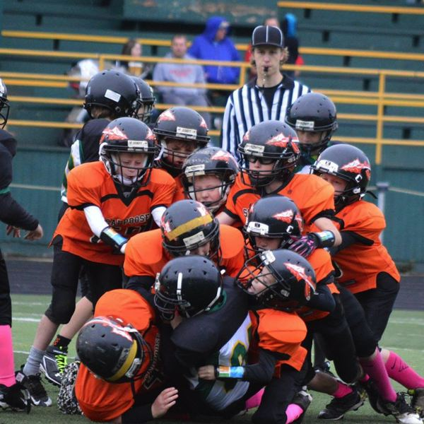 PHOTO COURTESY: SCAPPOOSE YOUTH FOOTBALL - Scappoose Youth Football, as a Tualatin Valley Youth Football League representative and whose third- and fourth-graders are pictured swarming to a tackle in seasons past, teaches USA Football Heads Up techniques to avoid injury in blocking and tackling.