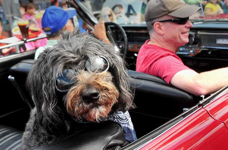 CONNECTION FILE PHOTO - The 'Pooch Parade' leads the pack at Multnomah Days, happening the weekend of Aug. 19-20. Pictured is Tony Leonetti's dog, Fanny, who was in the parade afew years ago.