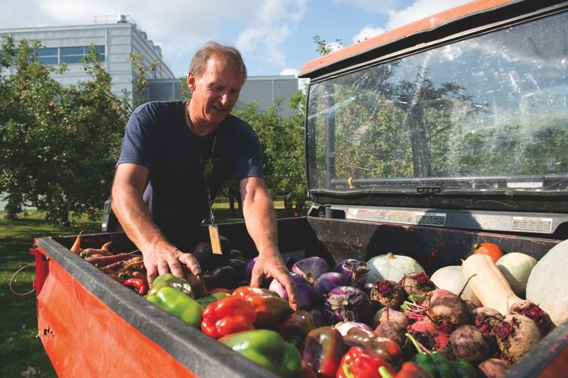 COURTESY CIRQUE DU SOLEIL  - A Cirque du Soleil employee loads produce from the company garden into a truck bed.