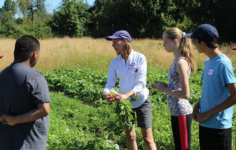SPOKESMAN PHOTO: ANDREW KILSTROM - CREST Farm Manager Aimee Jo Bartholomew teaches students how to bundle arugula.