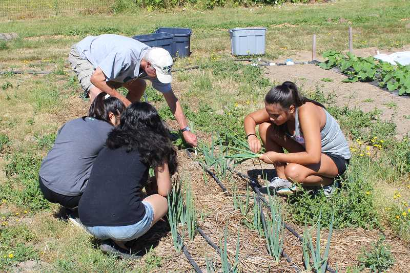 SPOKESMAN PHOTO: ANDREW KILSTROM - CREST interns and volunteers pick scallions at the CREST Farm.