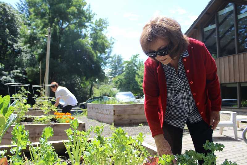 REVIEW PHOTO: SAM STITES - Carmela Selby inspects the kale being grown in the Cook's Garden behind Lake Oswego's Adult Community Center on G Avenue. Selby, a recent transplant from California, has several years of experience with urban farming.