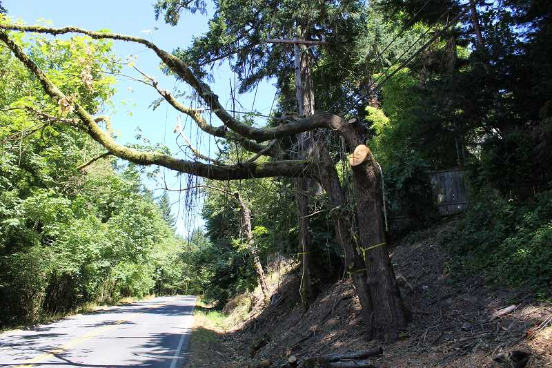 REVIEW PHOTO: ANTHONY MACUK - Some trees on South Shore Boulevard were trimmed down to single branches or just the trunk, prompting calls for them to be removed entirely.
