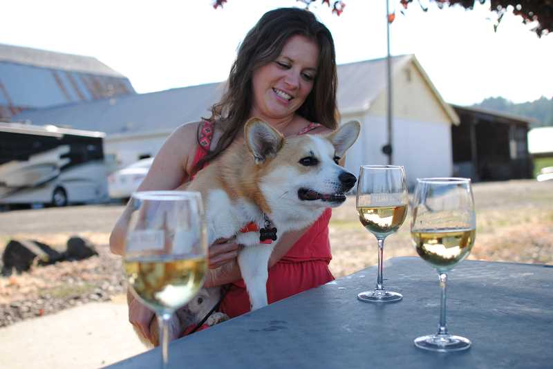 NEWS-TIMES PHOTO: EMILY GOODYKOONTZ - A curious corgi, Gatsby gives his owner Jennifer Coffeys glass of wine a sniff at Plum Hill Vineyards' weekly Yappy Hour.