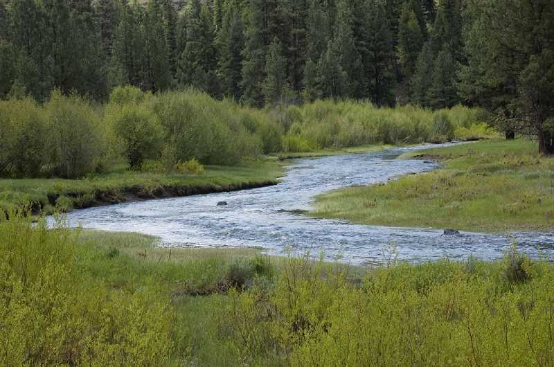 PAMPLIN MEDIA FILE PHOTO - Deep Creek in Ochoco National Forest, east of Prineville, Ore. National Forests would be among lands made more accessable under a new bill introduced by U.S. Sen. Ron Wyden.