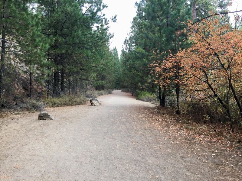 CONTRIBUTED - The mostly wide, flat trail is shaded by tall Ponderosa pine trees, making the hike comfortable even during the warmest central Oregon late summer days.