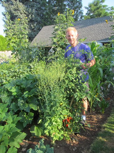 PHOTO BY DICK TRTEK - Larry Smith's tomatoes are just starting to turn red, while behind him his sunflowers have reached towering heights this summer.