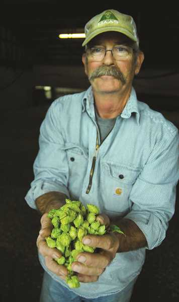 GARY ALLEN - Hop farm owner Dave Smith shows the cones that are harvested and, once processed, go to breweries around the world.
