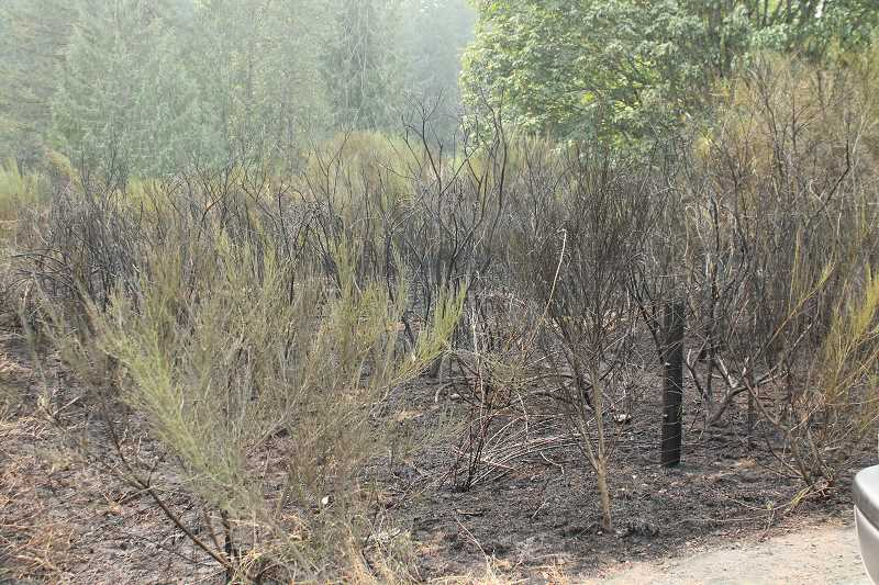 PIONEER PHOTO: CONNER WILLIAMS  - The scorched ground from a small brush fire that burned about one-half of an acre of scotch brush and blackberry bushes just off Dickey Prairie Road near Glen Avon Tuesday.