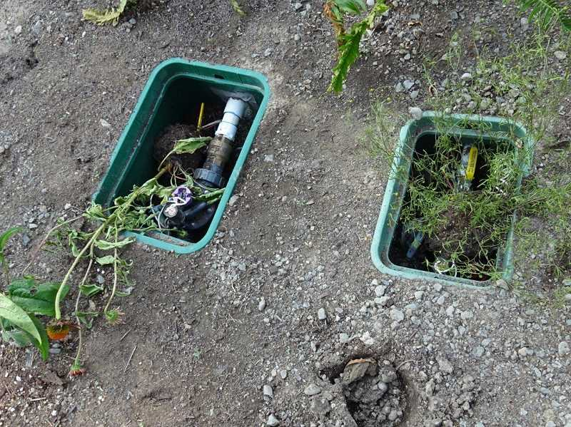 Irrigation boxes were opened and uprooted plants were placed inside.