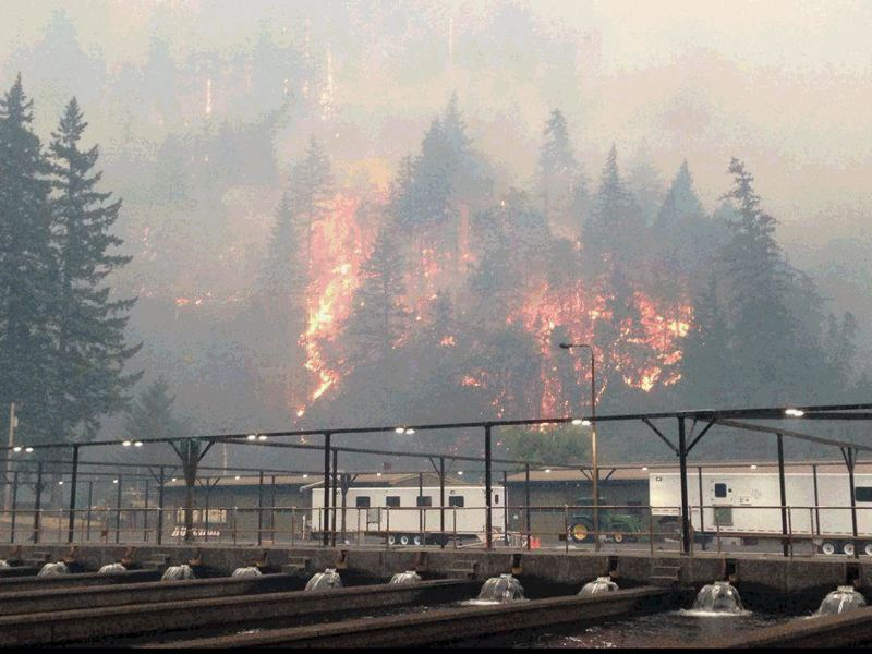COURTESY PHOTO: OREGON DEPARTMENT OF FISH AND WILDLIFE - The Eagle Creek Fire can be seen from the  Cascade fish hatchery along Eagle Creek, about a mile west of Cascade Locks.