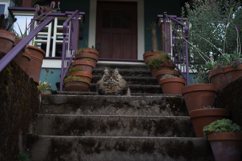 COURTESY: MAX OGDEN - Max Ogden enjoys taking photos of Portland's outdoor cats.