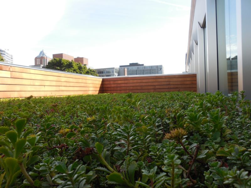 PAMPLIN MEDIA GROUP: JOSEPH GALLIVAN - Green roofs are everywhere.