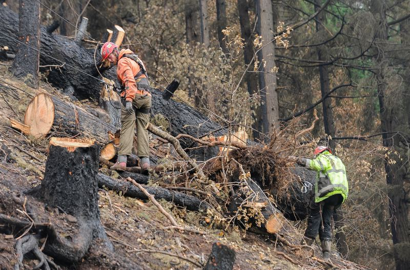 OUTLOOK PHOTO: JOSH KULLA - Rock scalers work on removing hazardous, fire-damaged trees Thursday morning from a hillside at Tooth Rock, just a few hundred yards west of Eagle Creek.