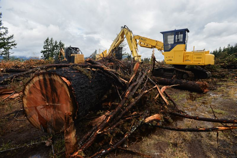 OUTLOOK PHOTO: JOSH KULLA - Oregon Department of Transportation officials estimate more than 4,100 hazard trees have so far been removed from Columbia River Gorge hillsides in the wake of the Eagle Creek Fire.