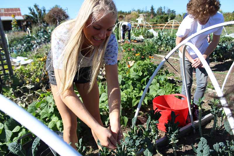REVIEW PHOTO: SAM STITES - Katie Freeman, an LOHS sophomore, says working on the farm has given her a perspective on food cultivation that she will use in pursuit of a career as a nutritionist.