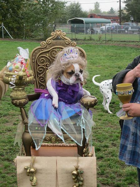 FILE - Dogs in costume, like this pretty princess pup, are welcome at Bridgeport Village on Saturday.