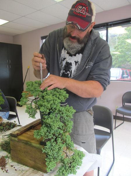 PHOTO BY: ELLEN SPITALERI - Steve Leaming, vice president of the Bonsai Society of Portland, works on his cascade-style juniper tree, during a workshop last year at the Milwaukie Center.