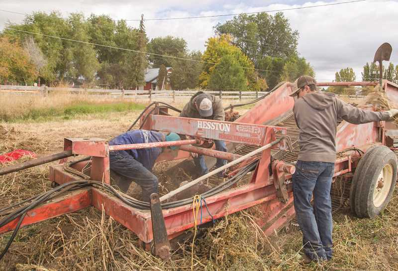 EJ CORONADO/SPECIAL TO THE CENTRAL OREGONIAN - FFA members and alumni run harvest equipment at the land lab, located at Barnes Butte and Yellowpine roads.
