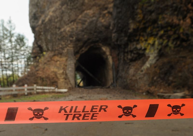 OUTLOOK PHOTO: JOSH KULLA - While the idea of a 'killer tree' may sound hyperbolic, authorities say the risk of toppling timber and unpredictable debris slides is real.