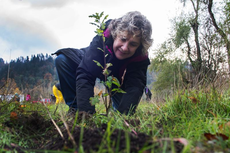 CONTRIBUTED PHOTO: PORT OF PORTLAND  - A volunteer plants a native plant at Sandy River Delta Park on Saturday, Nov. 4.