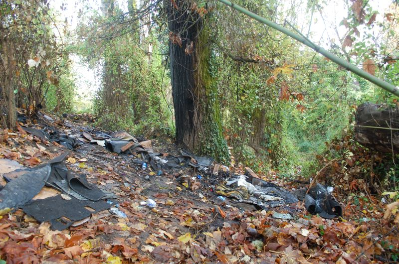 PHOTO BY RAYMOND RENDLEMAN - A fire surrounded trees in Abernethy Creek Park where a homeless woman died on Nov. 8.