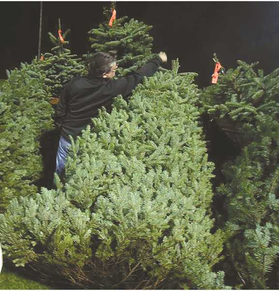 Christmas tree season is off and running in the area.